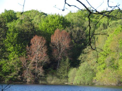 De røde blade, set fra den anden side af søen