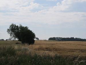 Den sædvanlige vinkel - der er høstet raps til venstre for hegnet