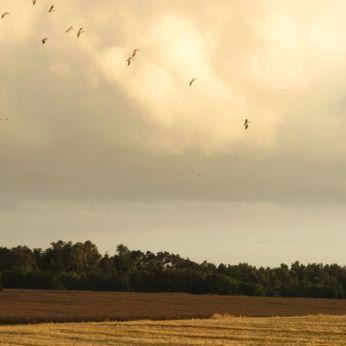 Somme tider var flokken - eskadrillen - ved at gå ud af formation -
