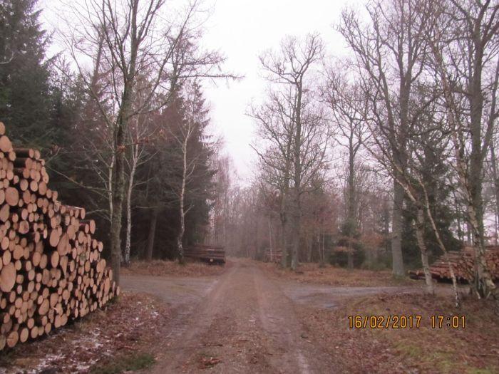 Skovarbejderne har været flittige -- Inde i skoven regner det to gange, sagde min onkel engang - men det var nu ikke rigtigt på denne tur (Torsdag d.16) - støvregnen blev fanget af træerne og der var ikke nok regn til at det dryppede inde i skoven --