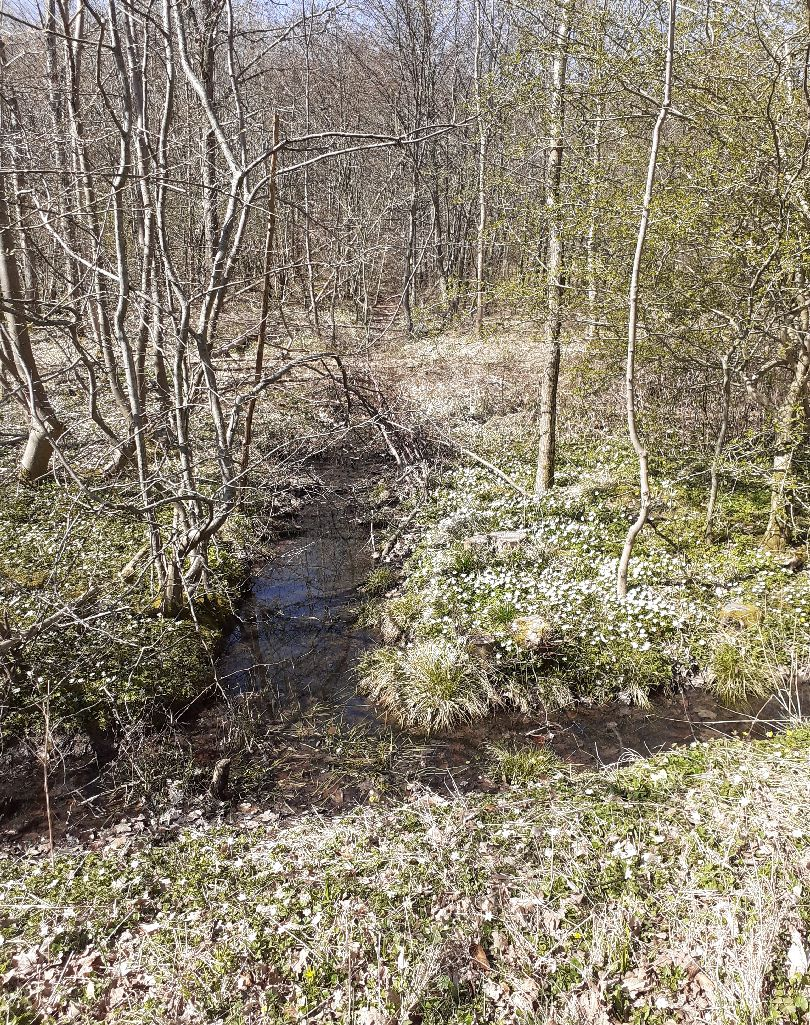 forest ditch